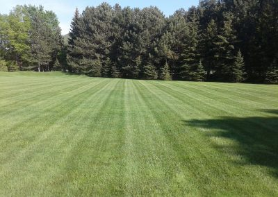 Lines cut into a lawn using a Walker mower