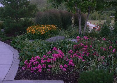 Carpet roses with Hemerocallis and grasses