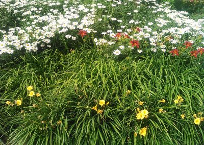 Daisies and Daylillies