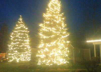 Warm white lights on Spruce trees